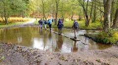 Cannock Chase stepping stones