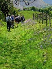 Horseshoe Pass bluebells